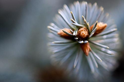 Hidden beauty on pine tree
